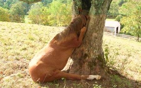 horsetree2